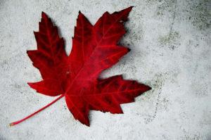 maple leaf symbolism