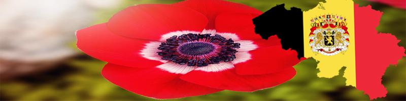 National Flower of Belgium