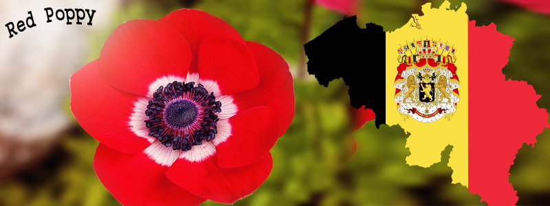 National flower of national flowers by country mightylinksfo Image collections
