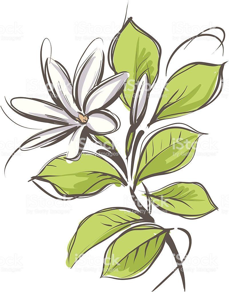 National Flower of Tahiti flower art