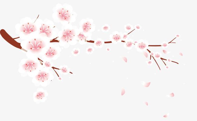 Plum blossom petals