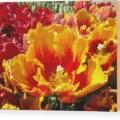 Yellow cedar flower art