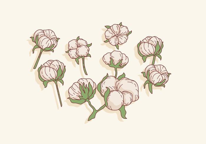 cotton flower art