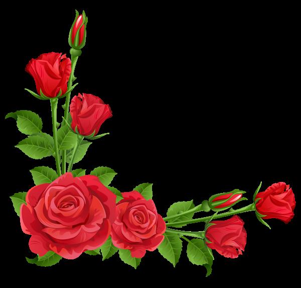 red rose flower art